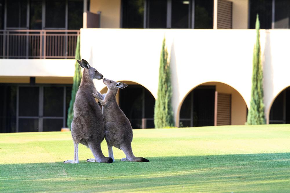 partner-kangaroos